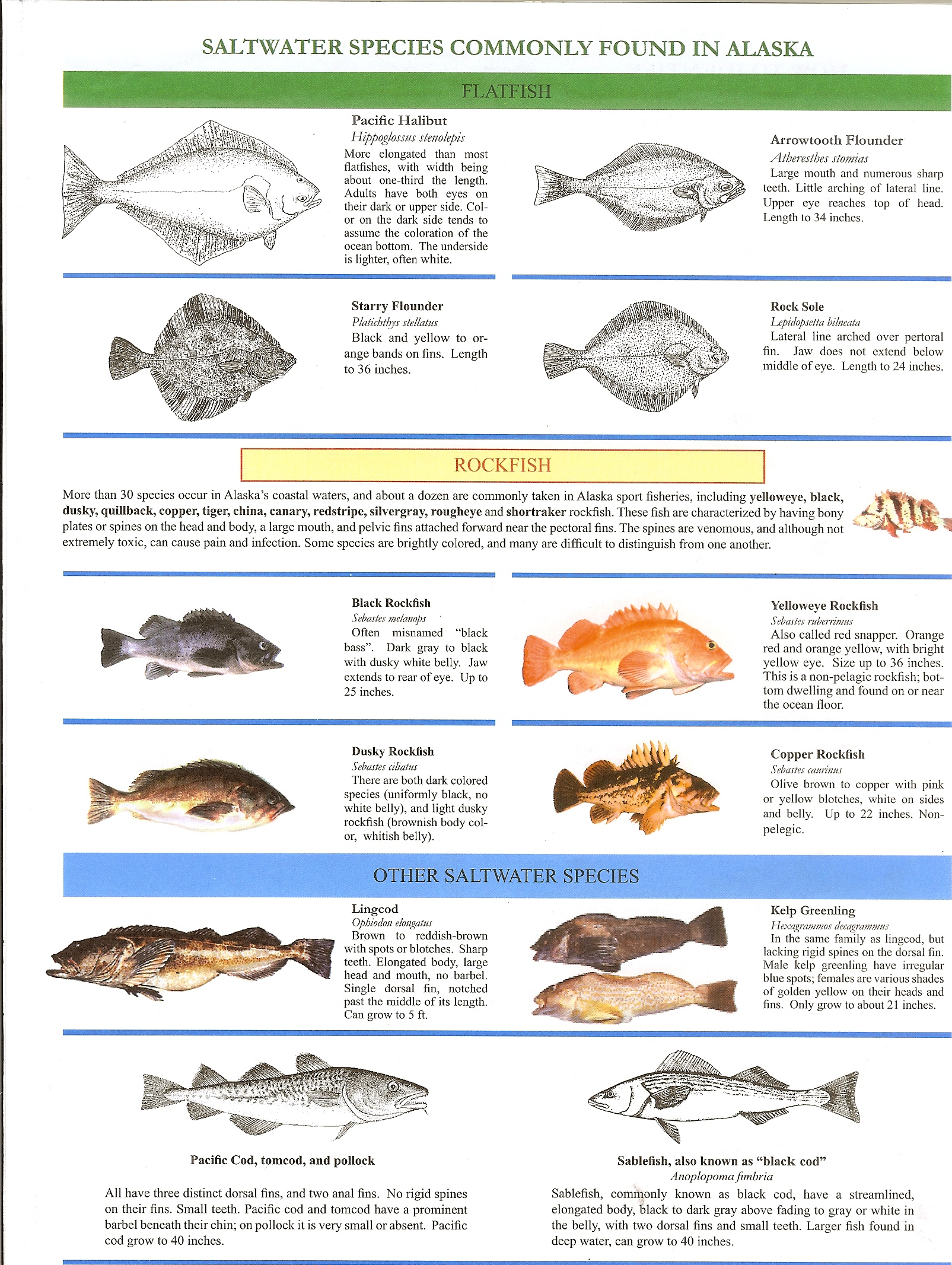 Fish Discriptions 2-1